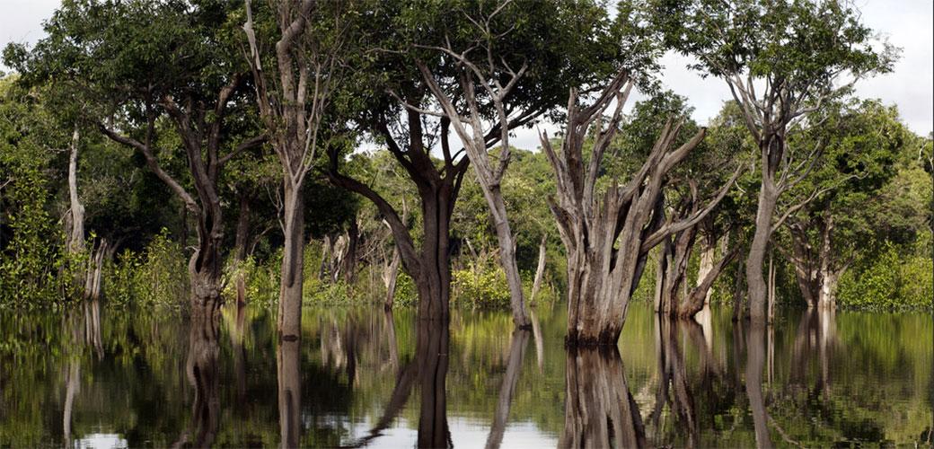 Slika: Čudesne činjenice o Amazonu