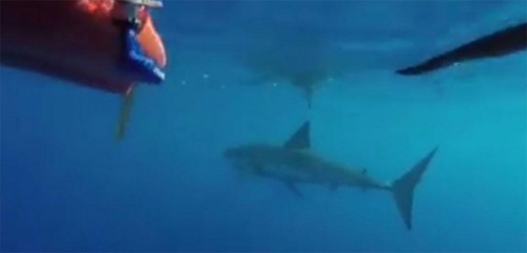 Slika: Verovatno najstrašniji video ove nedelje