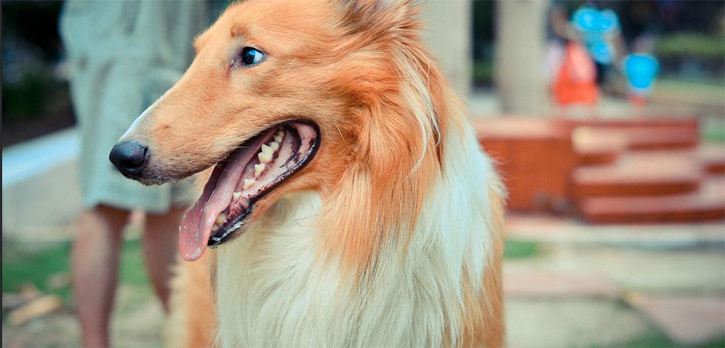Slika: Ako sa psima pričate kao sa ljudima