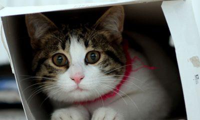 Zašto mačke obožavaju kutije?