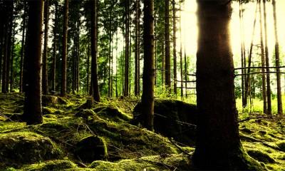 Koliko vrsta drveća uopšte postoji