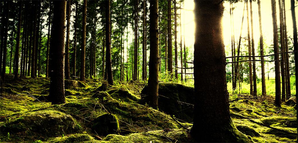 Slika: Koliko vrsta drveća uopšte postoji