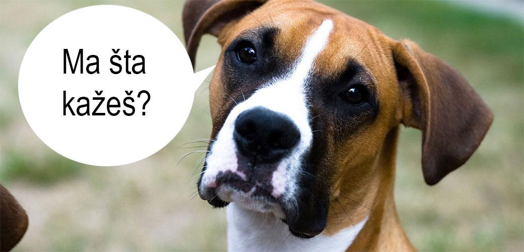 Psi mogu da pričaju sa ljudima