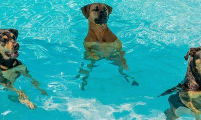 Da li su bazeni i hlor opasni?
