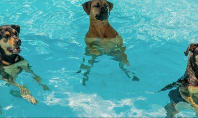 Da li su bazeni sasvim bezbedni?