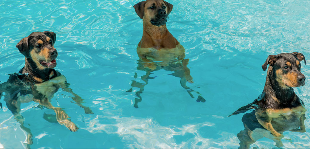 Slika: Da li su bazeni sasvim bezbedni?