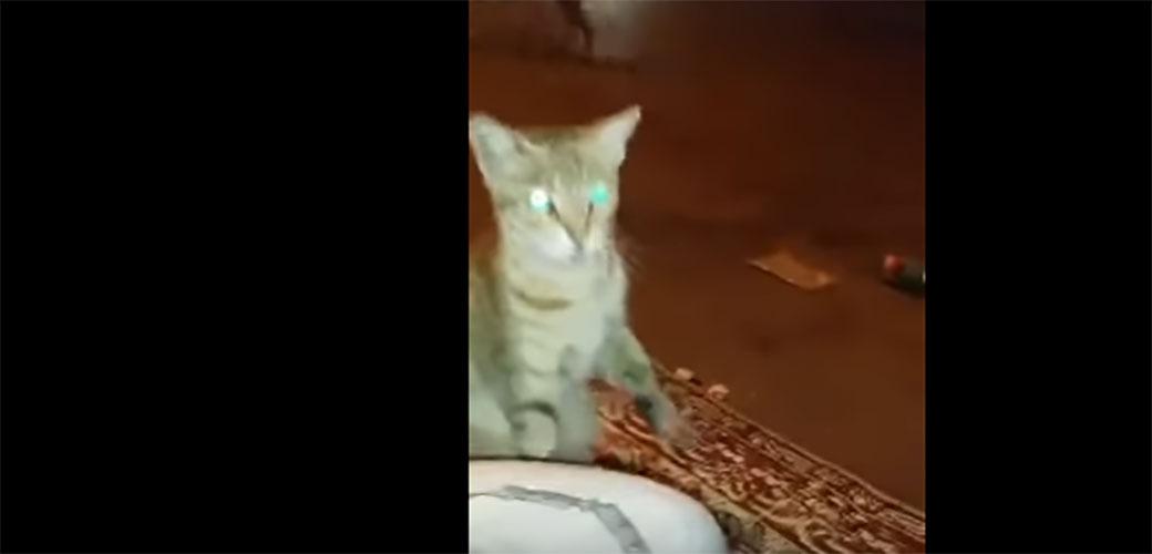 Slika: Maca koja stvarno želi da se uklopi