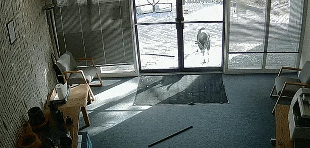 Ova koza je jedna nezadovoljna mušterija