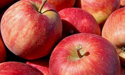 5 jestivih biljaka sa otrovnim delovima