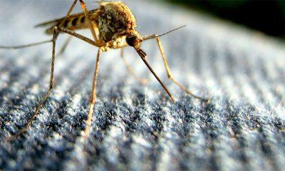 Šta da NE radite posle ujeda komarca  %Post Title