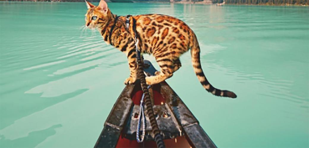 Suki je mačka koja živi bolje od vas