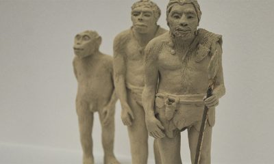 Novo otkriće o evoluciji čoveka  %Post Title
