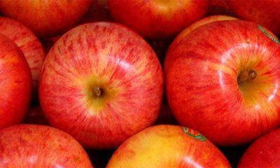 Zašto je jabuka savršeno voće  %Post Title