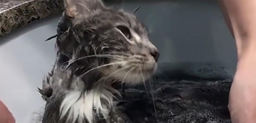 Slika: E ova mačka ga živi