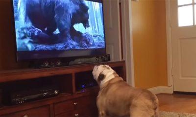 Ovaj pas se sekira zbog Leonarda
