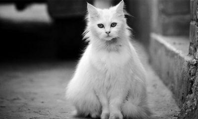Da li su pametniji psi ili mačke?  %Post Title