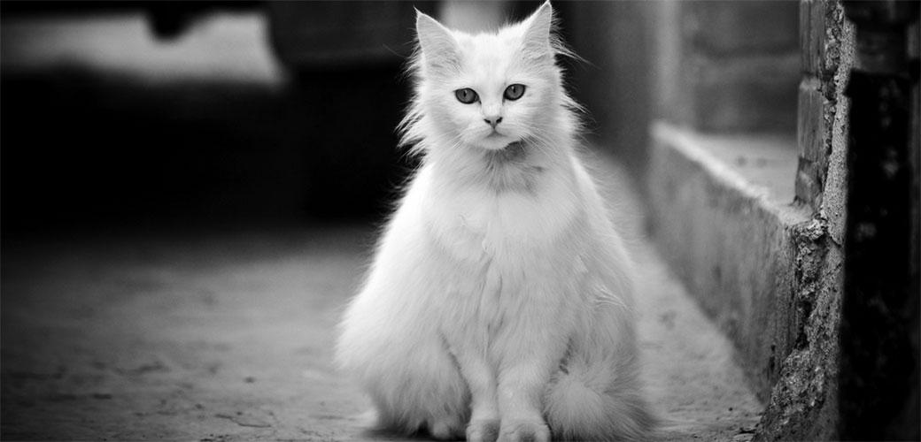 Da li su pametniji psi ili mačke?