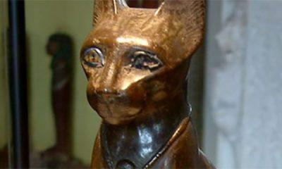Mačke i ljudi već dugo imaju tajnu vezu  %Post Title