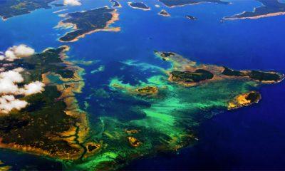 Uzet pelcer korala sa Velikog grebena
