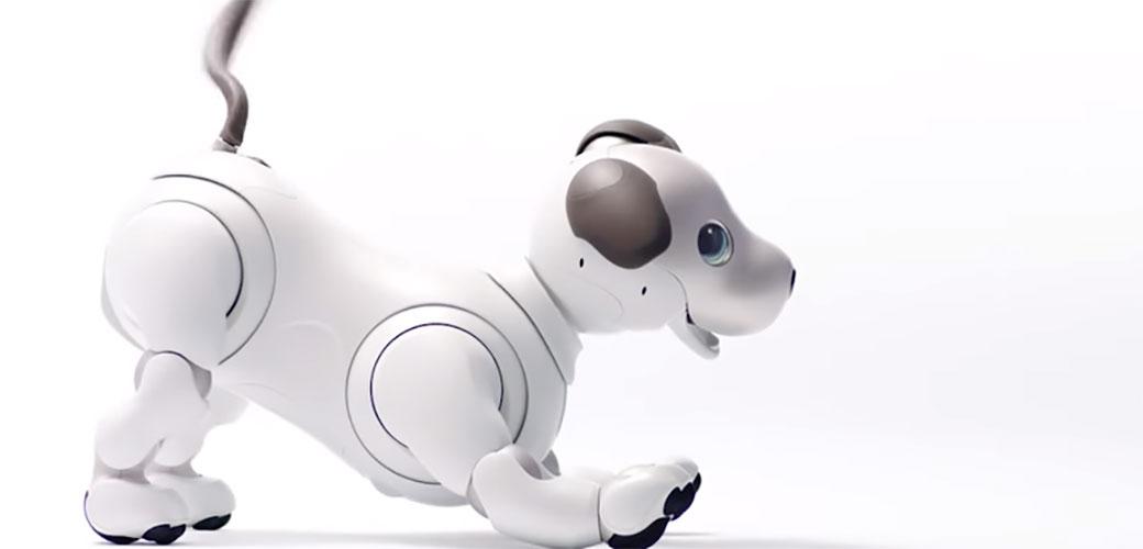 Evo ga novi Sony Aibo