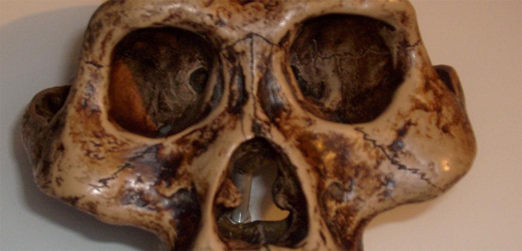 Slika: Otkriven kompletan ljudski skelet star 3,6 miliona godina
