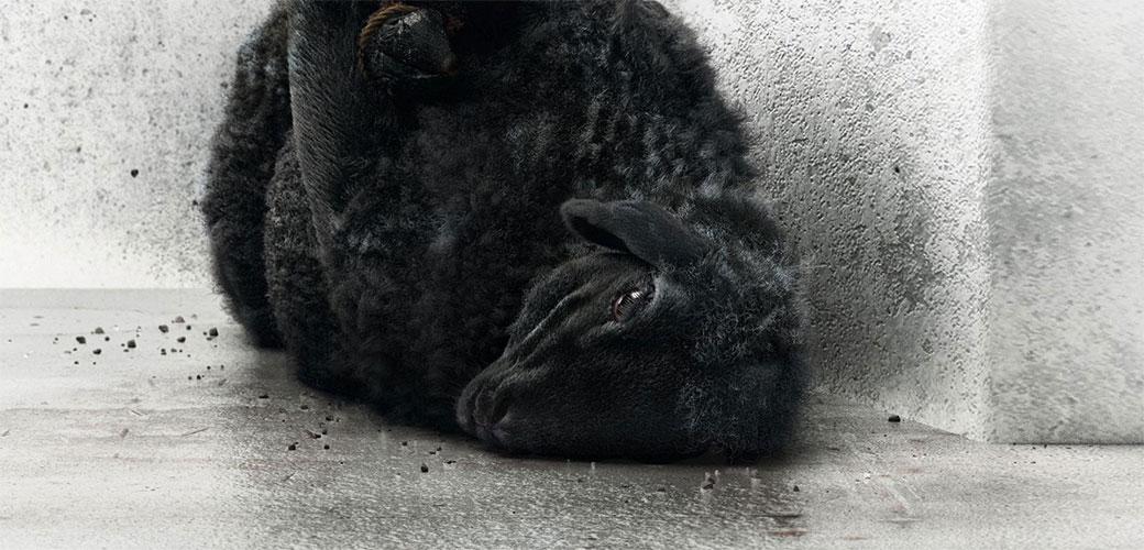 Neke životinje su tretirane kao đubre