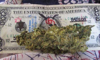 Marihuana nema štetne posledice  %Post Title