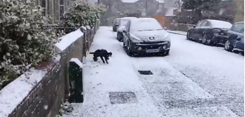 Pas prvi put vidi sneg i naravno odlepi