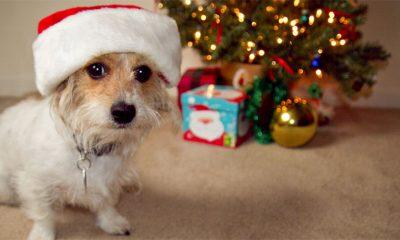 Doček Nove godine - opasan stres za kućne ljubimce