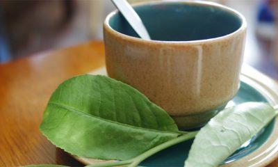 Ljudi koji piju čaj su navodno kreativniji?