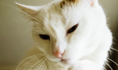 Predenje mačaka je odlično za vlasnike  %Post Title