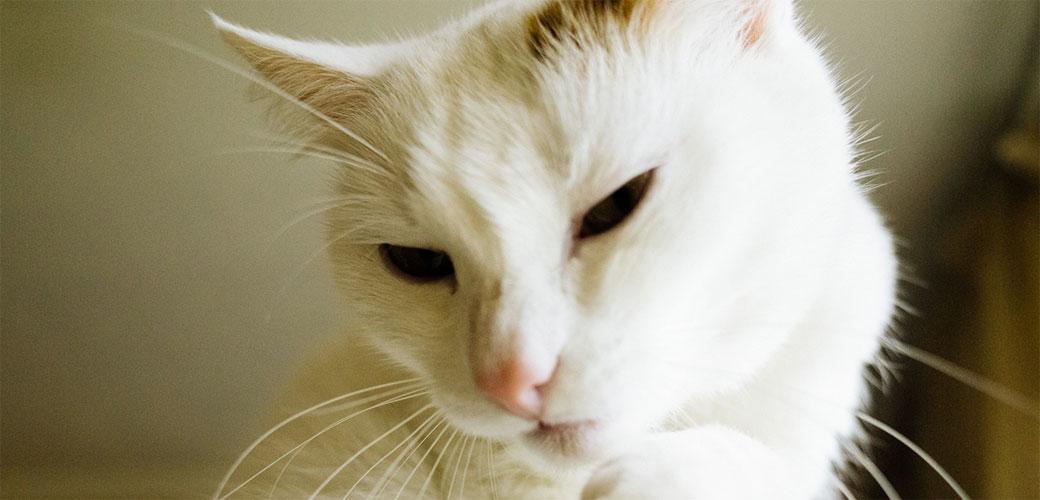 Predenje mačaka je odlično za vlasnike