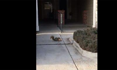 Veverica pronašla poslasticu  %Post Title