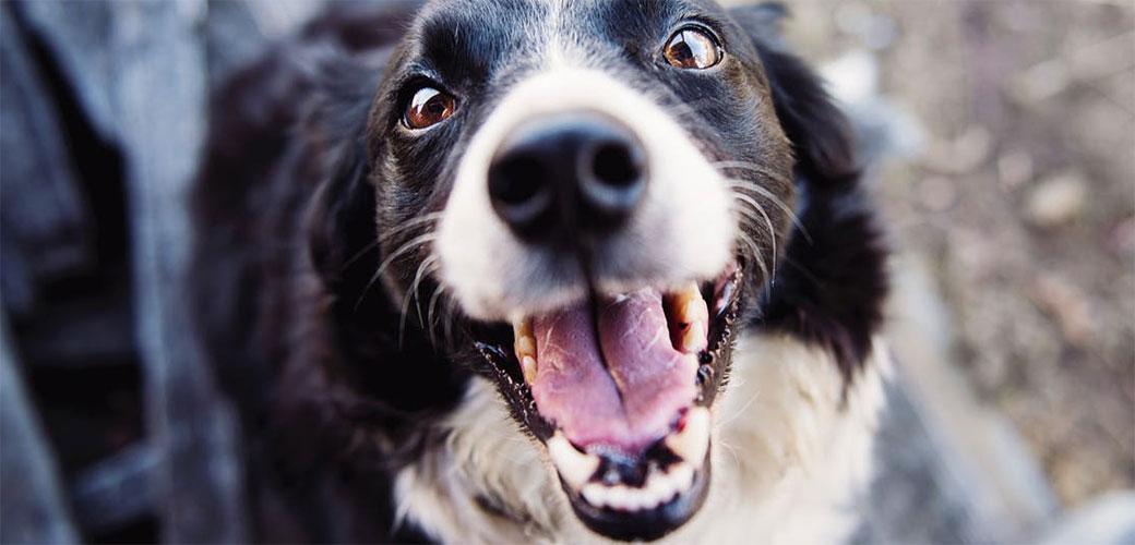 Psi najviše grizu decu, evo i zašto