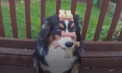 Ovo je najbolje dresiran pas IKAD