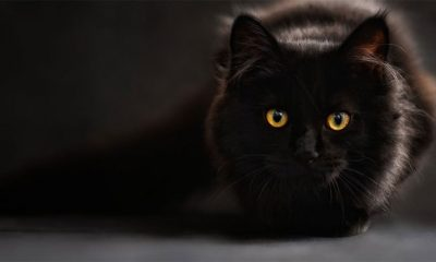 Da li crne mačke donose nesreću?  %Post Title