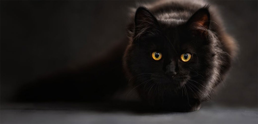 Da li crne mačke donose nesreću?