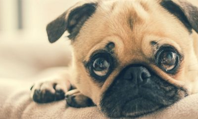 Potpuno pogrešno tumačimo poruke koje nam šalju psi