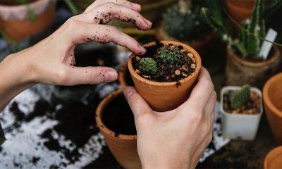 Kako presaditi biljku