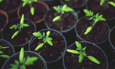 Kako zasaditi baštu