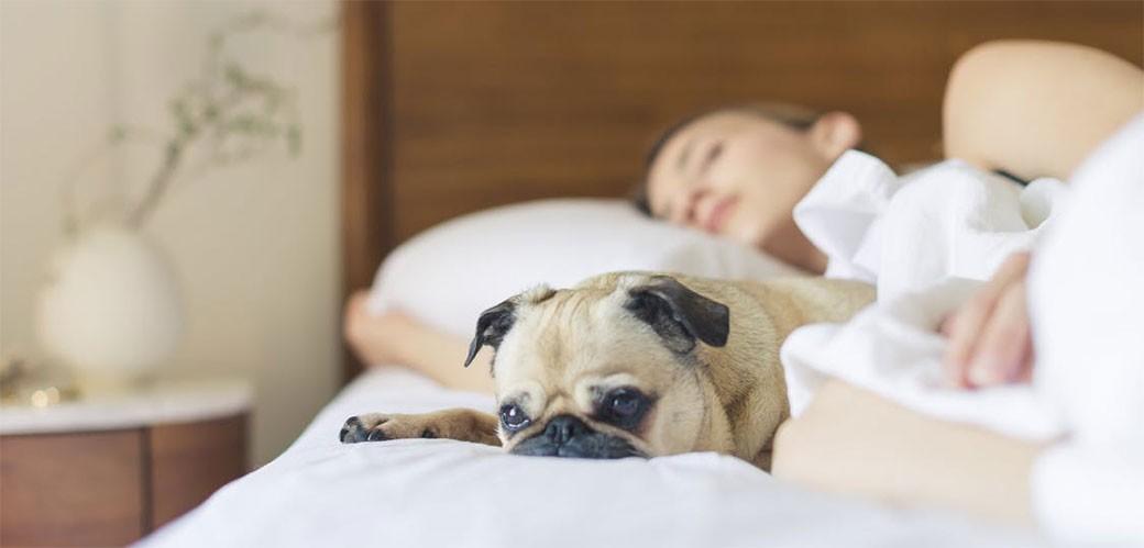 Naučnici istražili krevete običnih ljudi