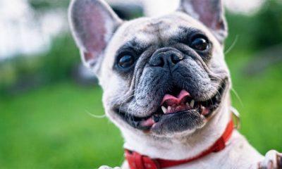 Šta psi misle kada ih dozivate?