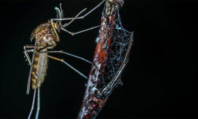 3 sredstva protiv komaraca (koja ne rade)  %Post Title