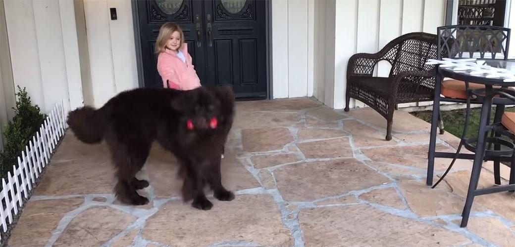 Divni pas ne da maloj gazdarici da ode
