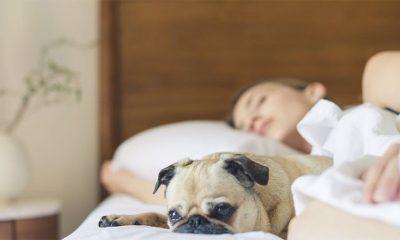 Vaša spavaća soba je prepuna otrova  %Post Title