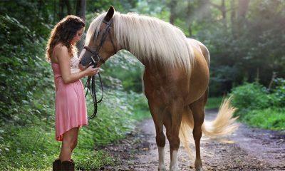 Konji jako dobro prepoznaju ljudske emocije