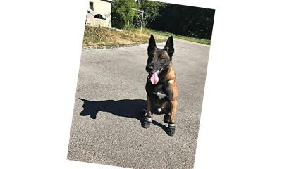 Policijski psi nose čizme u Cirihu