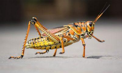 Insekti su ipak hrana budućnosti  %Post Title