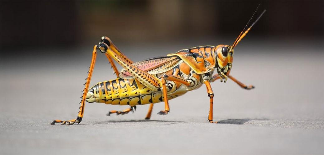 Insekti su ipak hrana budućnosti