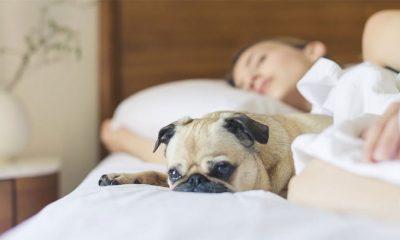 Duže spavanje je opasno  %Post Title